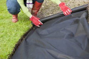 Woman gardener unrolling weed control barrier cloth onto a garden border next to trimmed grass lawn....