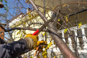 Branch pruning in Autumn